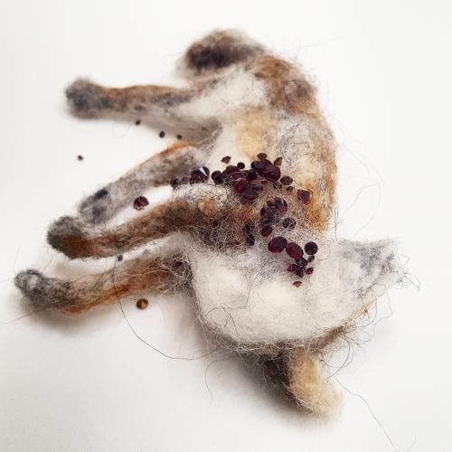 Coyote Roadkill