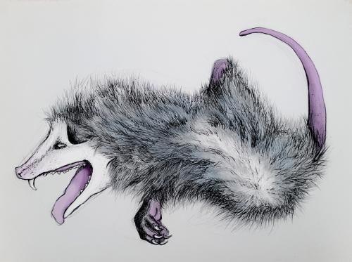 Roadside Attraction: Possum