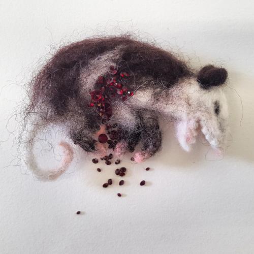 Possum Roadkill