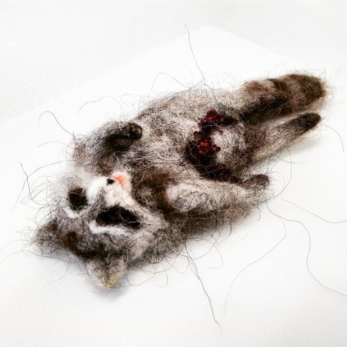 Racoon Roadkill